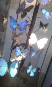 Butterflies from Objet de Curiosite